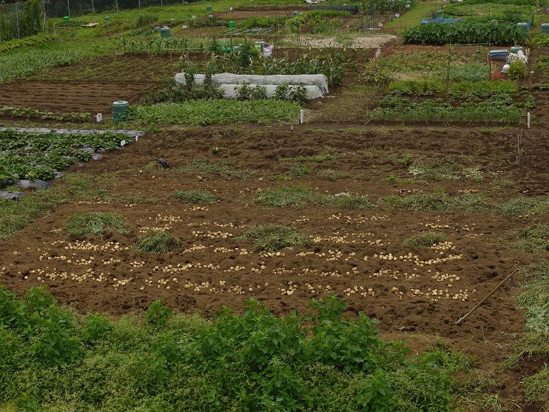 中伊豆体験農園、一般農園の利用募集!