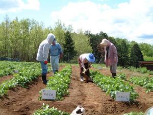 野菜畑オーナー募集を募集します